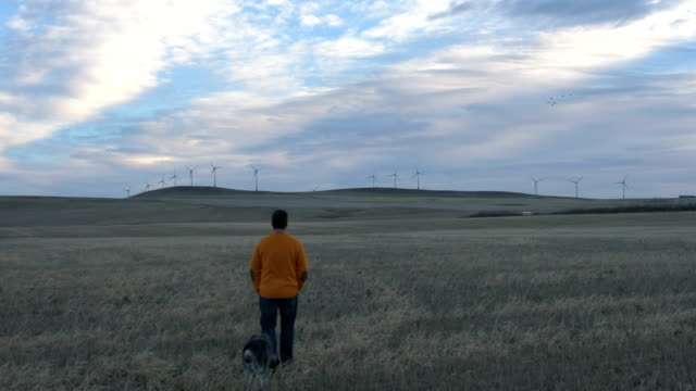 man and dog walk into field, wind turbines spin above - alberta stock videos & royalty-free footage