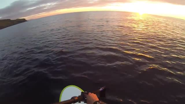man and his dog encountered some dolphins while paddleboarding in argyll, scotland, on may 6. sean nicholson took his dog, tia,... - https stock-videos und b-roll-filmmaterial
