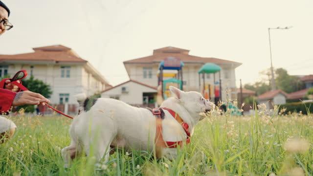 mann und seine französische bulldogge laufen auf dem spielplatz. - haustierleine stock-videos und b-roll-filmmaterial