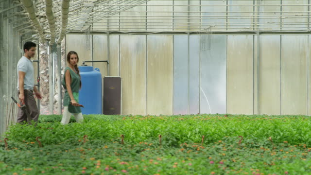stockvideo's en b-roll-footage met pan ts man and woman carrying gardening implements walking through greenhouse - mid volwassen mannen