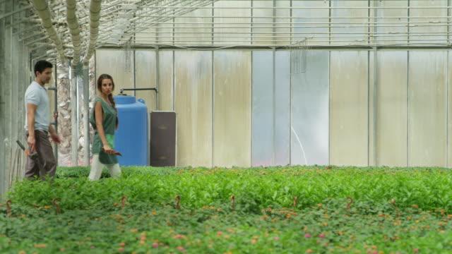 vídeos de stock, filmes e b-roll de pan ts man and woman carrying gardening implements walking through greenhouse - homens de idade mediana
