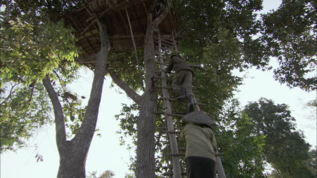 stockvideo's en b-roll-footage met ms cs la tu man and woman climbing ladder into tree house, laos - ladder gefabriceerd object