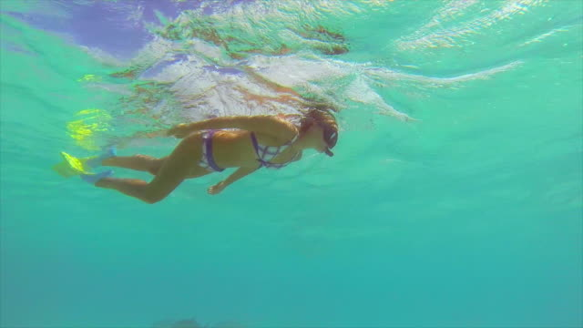 a man and woman couple snorkeling over a coral reef of a tropical island. - exotik stock-videos und b-roll-filmmaterial