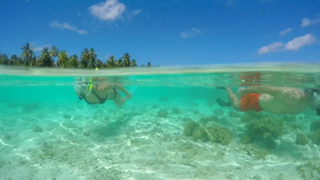 a man and woman couple snorkeling over the coral reef of a tropical island. - shorts stock-videos und b-roll-filmmaterial