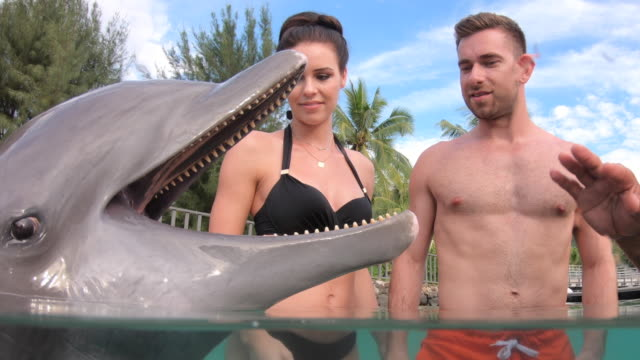 vidéos et rushes de a man and woman couple swimming with dolphins at a hotel resort. - pris au piège