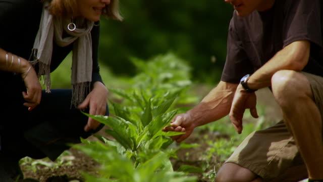 ms tu pan man and woman examining herbs on farm / burlington, vermont, usa - burlington vermont stock videos & royalty-free footage