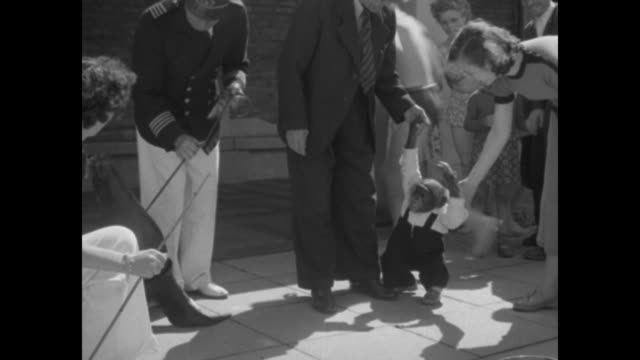 man and woman holding hands with chimpanzee standing next to them man in nautical outfit holding sea lion on leash people watching / two shots of... - westberlin stock-videos und b-roll-filmmaterial