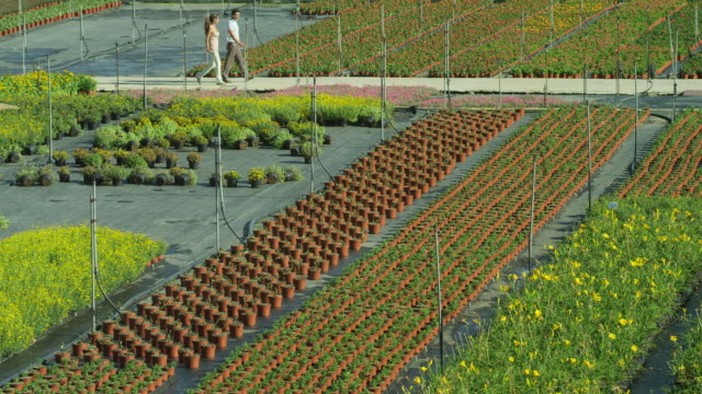 ha ls pan man and woman in distance walking through beds of plants in an outdoor nursery - 50 seconds or greater stock videos & royalty-free footage
