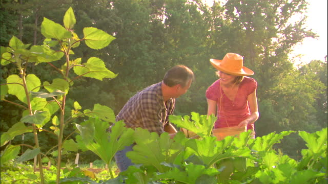 man and woman in garden - see other clips from this shoot 1425 stock videos and b-roll footage