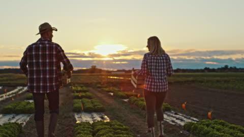 vídeos y material grabado en eventos de stock de slo mo hombre y mujer en camisas a cuadros trabajando en un campo con verduras frescas al atardecer - tartán