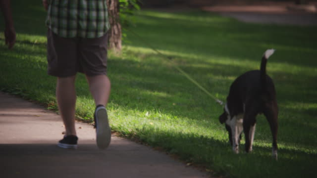 man and woman walk along a path in a treed park with a black and white dog on a leash. dog stops and sniffs grass. - 犬の綱点の映像素材/bロール