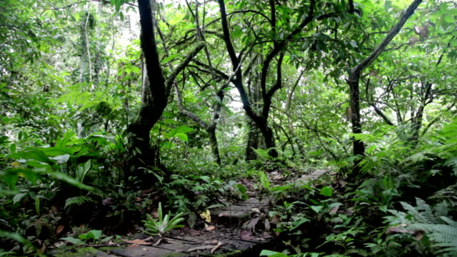 stockvideo's en b-roll-footage met man and woman walking away from camera in lush green jungle. - panama