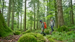 Man and woman walking in the forest carrying large backpacks