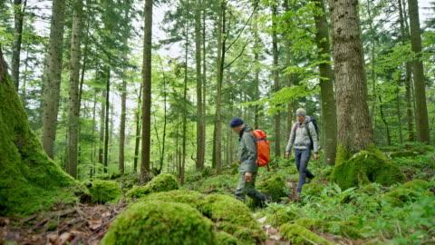 vídeos y material grabado en eventos de stock de hombre y mujer caminando por el bosque llevando grandes mochilas - vinculación