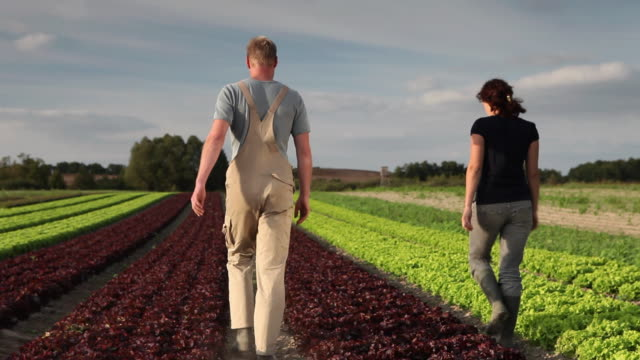 WS TD Man and woman walking through row of lettuce / Brodowin, Brandenburg, Germany