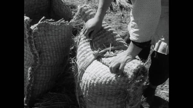 man and woman work to gather sacks of rice in japan; 1964 - agriculture stock videos & royalty-free footage