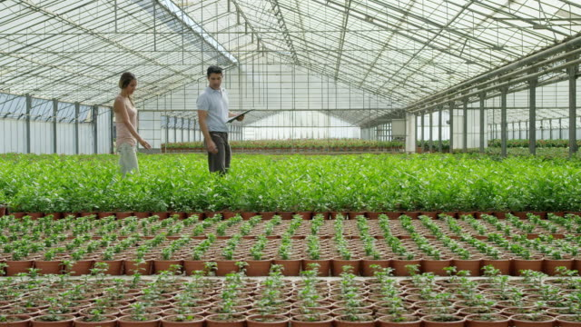 ds ls man and woman worker walking through greenhouse filled with rows of flowering plants, talking to each other, man carrying clipboard - uomini di età media video stock e b–roll