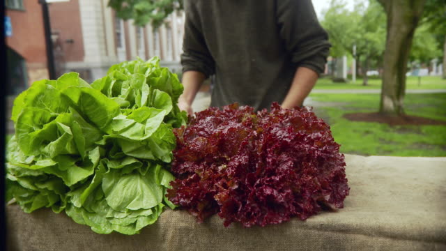 MS Man arranging lettuce on table / Burlington, Vermont, USA