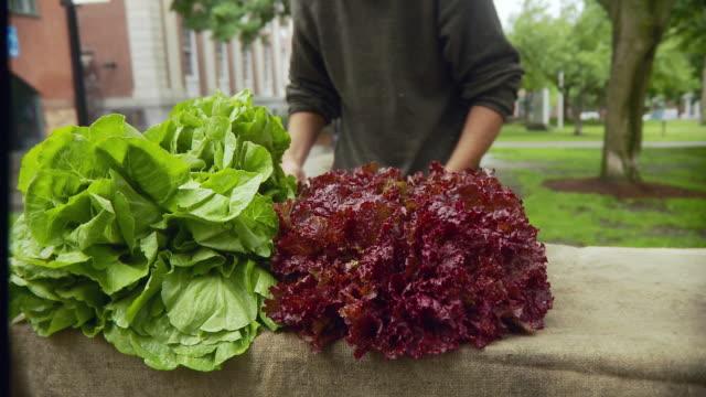 ms man arranging lettuce on table / burlington, vermont, usa  - vermont stock videos & royalty-free footage