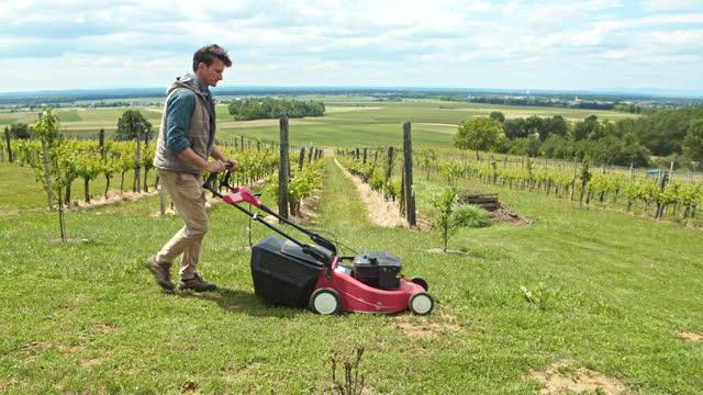 vidéos et rushes de slo mo homme arrangeant l'herbe dans le vignoble - pelouse