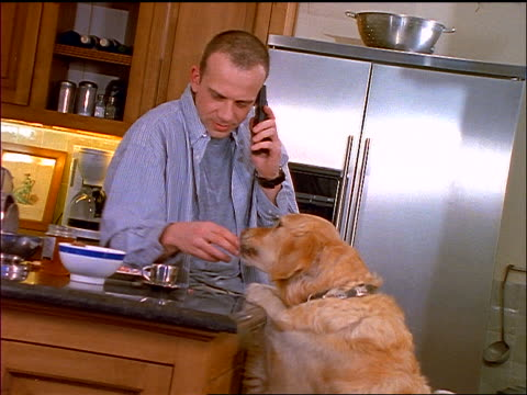 Man at kitchen counter talking on cell phone + feeding yellow retrievers