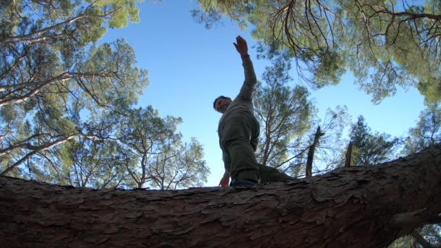 man balancing on fallen tree in forest - tree trunk stock videos & royalty-free footage