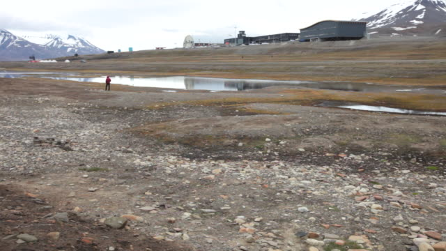 man being attacked by arctic terns as he walks through nesting seabirds at laguna bird area nearby longyearbyen airport, svalbard archipelago - スヴァールバル諸島およびヤンマイエン島点の映像素材/bロール