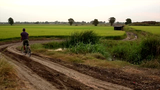 man bicycles down dirt track into rice fields, sunrise - moving down to seated position stock videos & royalty-free footage