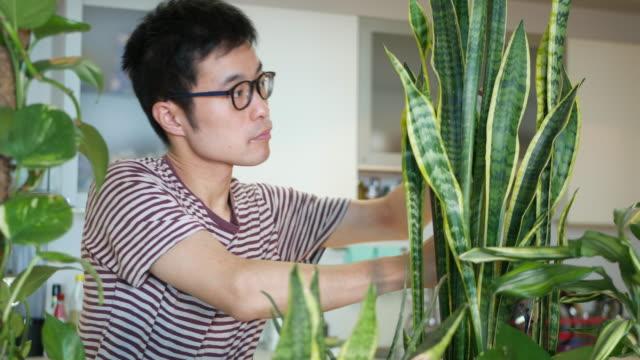 彼の屋内植物の世話をする男 - 多肉植物点の映像素材/bロール