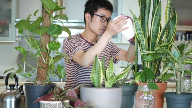 彼の屋内植物の世話をする男 - 趣味点の映像素材/bロール