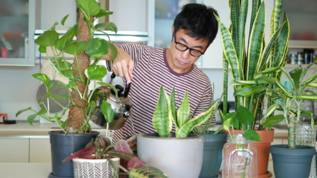 man caring for his indoor plants - pot plant stock videos and b-roll footage