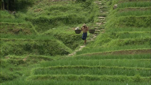 man carries two heavy baskets on pole across shoulders as he descends stairs cut into hillside of dragon's backbone rice terraces, guilin, guangxi zhuang - guilin stock videos & royalty-free footage
