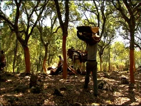 man carrying bark up hill, andalusia, southern spain - giuntura umana video stock e b–roll