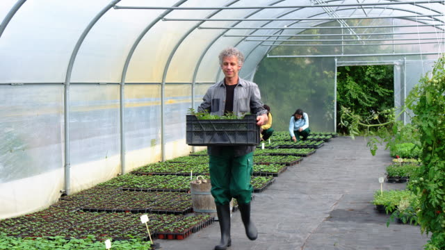 man carrying plants in a crate in greenhouse - mature adult stock videos & royalty-free footage
