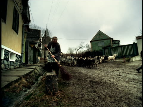 rear view man carrying surfboard runs thru herd of goats on village road / sibiu, transylvania - transylvania stock videos & royalty-free footage