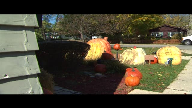 man carves 883 pound pumpkin on october 16 2012 in wheaton illinois - dupage county stock videos & royalty-free footage