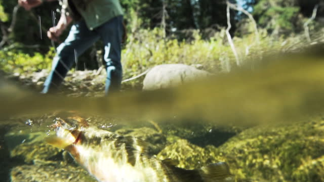 Man casts fly fishing line into stream, split frame