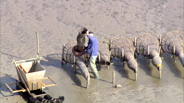ws aerial man checking fish in sea with two dogs / bremerhaven, lower saxony, germany - fischer stock-videos und b-roll-filmmaterial