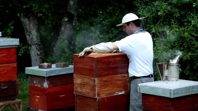 Man checking his hives and bees