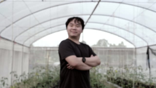 man checking plant in the greenhouse - raw food diet stock videos & royalty-free footage