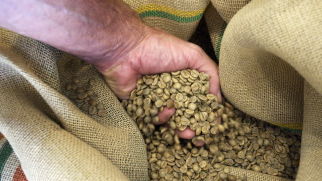 man checking the quality of raw coffee beans - sack stock videos & royalty-free footage