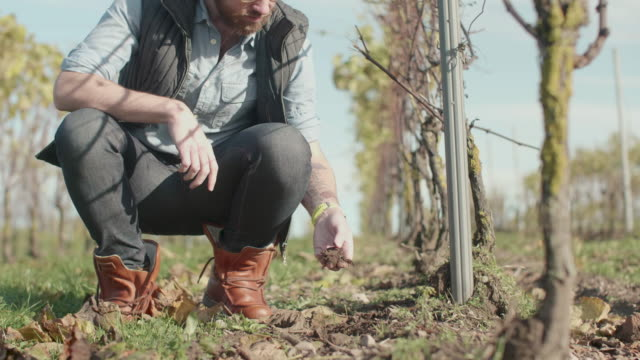 a man checking the soil in a vineyard - winemaking stock videos & royalty-free footage