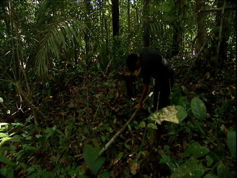 man chops wooden stake with machete and plants in ground for jungle camp support structure amazon rainforest venezuela - erektion stock-videos und b-roll-filmmaterial
