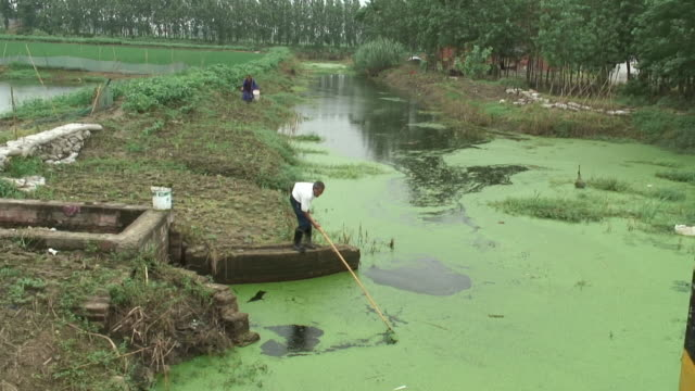 ha, ws, man cleaning pond with net, subei, china - 湿地点の映像素材/bロール