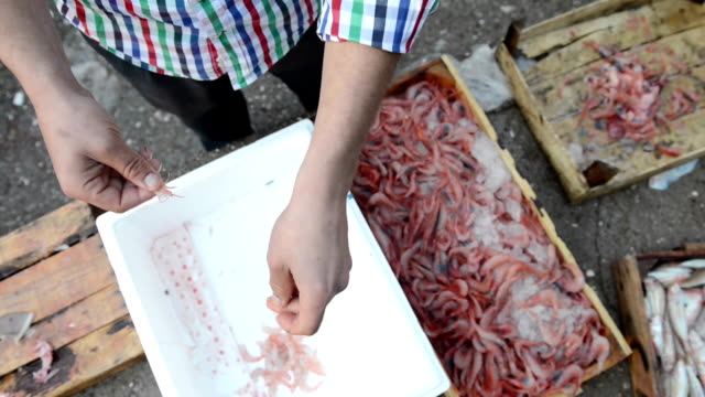 man cleaning shrimps - ozgurdonmaz stock videos and b-roll footage