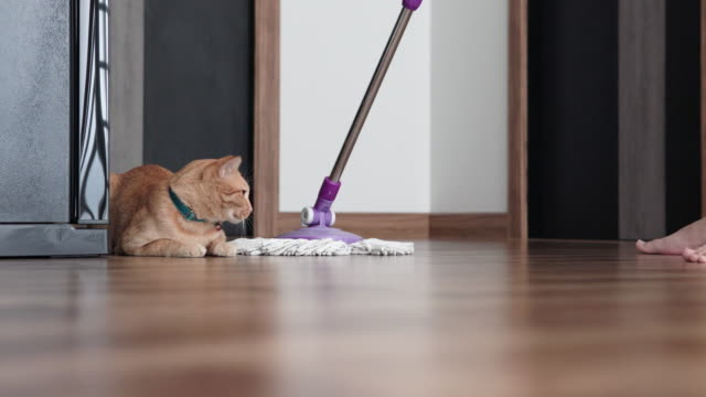 vídeos de stock e filmes b-roll de man cleaning the floor with mop. - labro