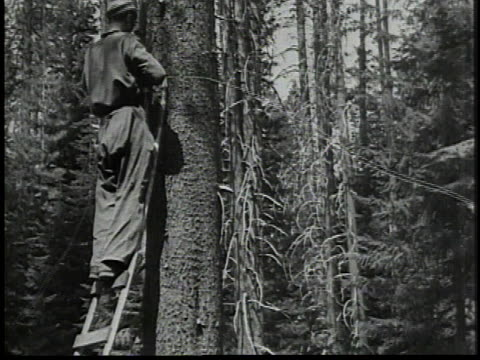 man climbing ladder against a tree / man operating radio / wen walking along a wooden pier / men sawing wood - 1934 stock videos & royalty-free footage