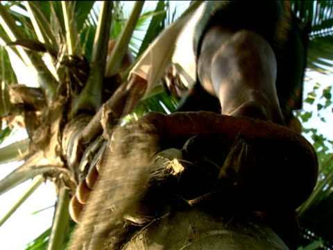 man climbing palm tree kerala - free climbing stock videos & royalty-free footage