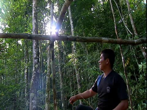 Man climbs timber framework while preparing jungle camp Amazon Rainforest Venezuela