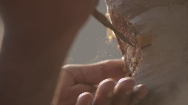 Man collects aromatic sap from frankincense tree, Oman